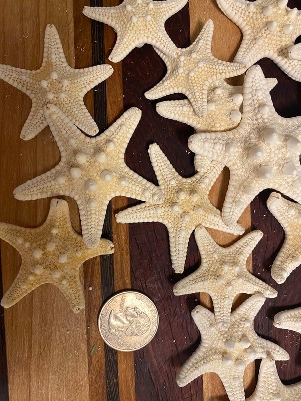 Starfish accessory size Chris Cline Design